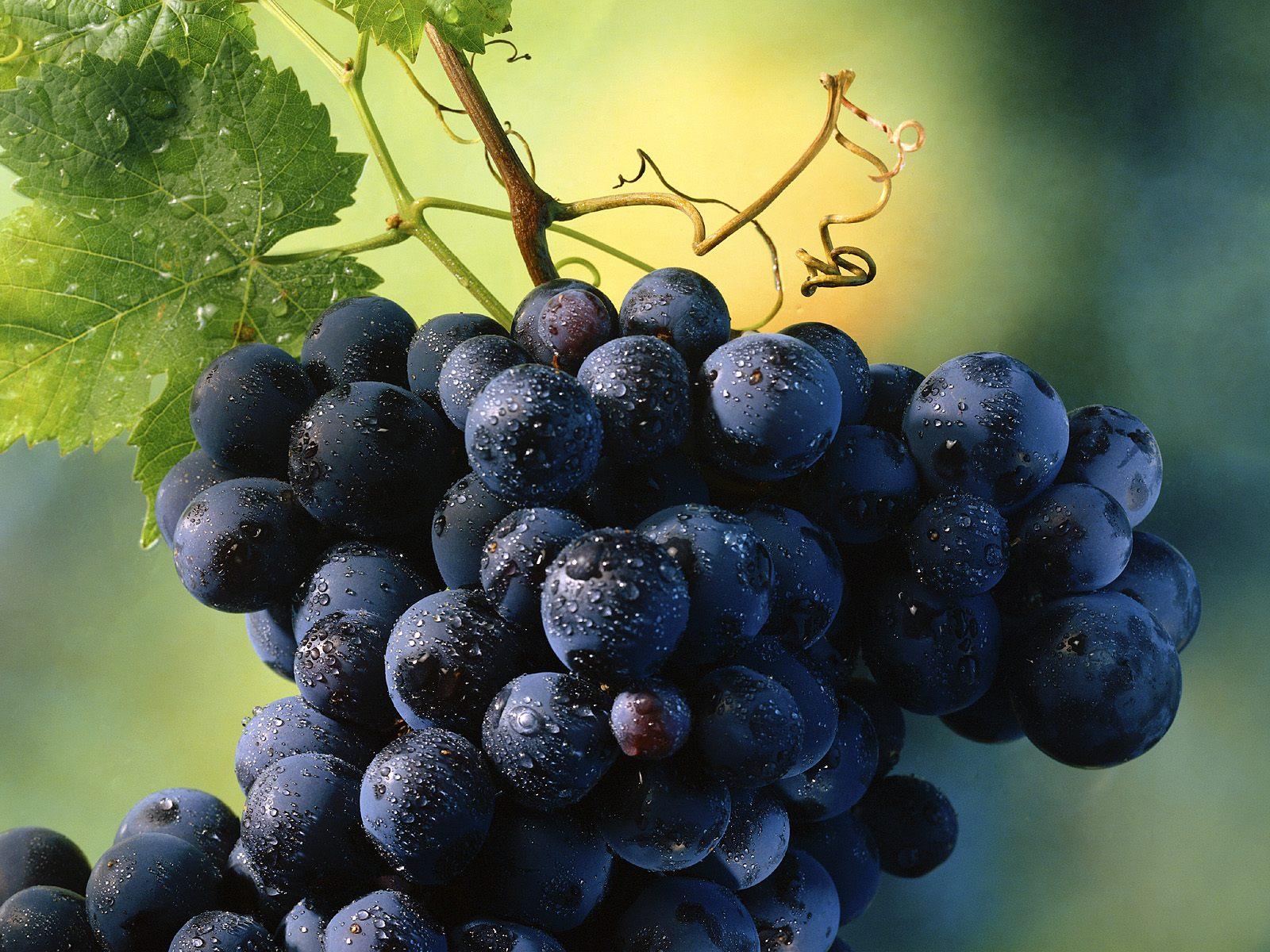В Ставропольском крае началось действие программы по поддержке виноградарства