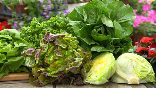 9 полезных видов листовой зелени для здоровья - Интересно о вкусном