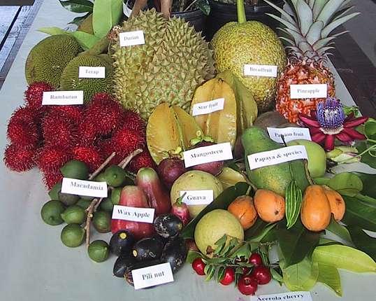 Экзотические фрукты. Знакомимся поближе. Часть 2