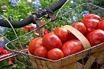 Как долго сохранить помидоры свежими